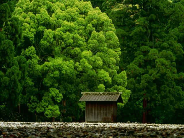 伊勢神宮写真集 緑鮮やか